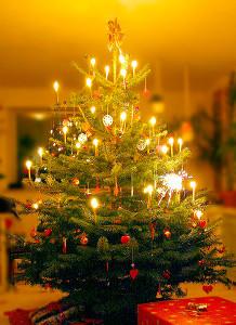 Juletrat