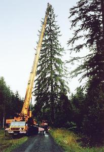 vanocni strom